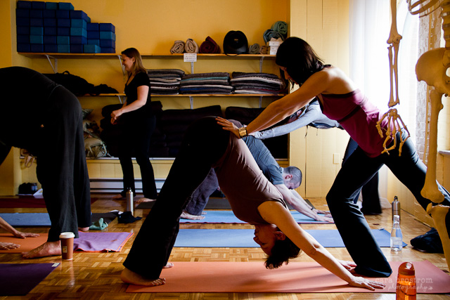 downward dog yoga teacher training